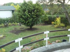 Foto 7 Gartenbungalow auf Pachtgrundstück