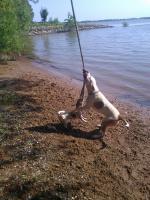 Gassi geher und Hunde Trainer