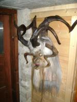 Foto 3 Gasteiner Krampusmasken und Bockhörner zu verkaufen