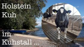 Geh mal in den Kuhstall … und seh Dir ne Holstein Kuh an ...