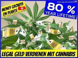 Geld wächst auf HANF 80% Profit lifetime