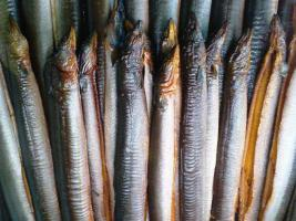 Geräucherte Aale frisch aus Bremerhaven
