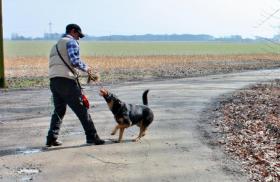 Foto 4 Geschenke Gutschein : Hunde Führerschein . ESSEN Ratingen Düsseldorf Duisburg Kassel Geldern 155 Euro incl Urkunde