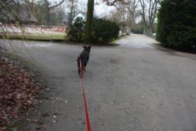 Foto 6 Geschenke Gutschein : Hunde Führerschein . ESSEN Ratingen Düsseldorf Duisburg Kassel Geldern 155 Euro incl Urkunde