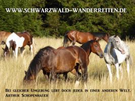 Foto 6 Geschenkidee für Reiter, Wanderreiter, Freizeitreiter - Wanderitt ab Todtmoos Au