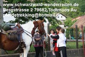 Foto 18 Geschenkidee für Reiter, Wanderreiter, Freizeitreiter - Wanderitt ab Todtmoos Au