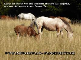 Foto 72 Geschenkidee für Reiter, Wanderreiter, Freizeitreiter - Wanderitt ab Todtmoos Au