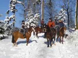 Foto 3 Geschenkidee für Reiterinnen / Reiter Abenteuer Wanderreiten im Naturpark Südschwarzwald
