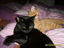 Ginger und Clarence
