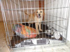 Gitterkennel für mittel große Hunde