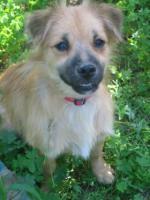 Gonzo - ein kleiner Sonnenschein (Tierschutzhund)