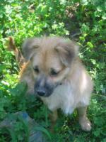 Foto 2 Gonzo - ein kleiner Sonnenschein (Tierschutzhund)