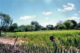 Foto 3 Großes Grundstück mit Flugpiste in Paraguay