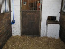 Großpferdebox mit täglichem Ausgang in 59387 Ascheberg-Herbern frei
