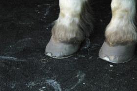 Gummimatten für alle Böden im Pferdebereich auch wasserdurchlässig