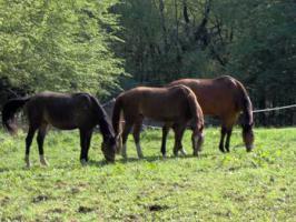 Foto 6 Gutshof in Bayern zur Pferdehaltung mit Reitplatz