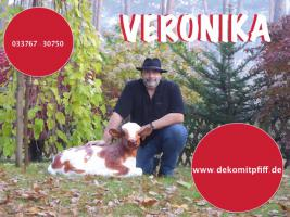 Foto 12 HALLO BAD LANGENSALZA - HALLO THÜRINGEN - Deko Kuh lebensgross / unseres hauseigenes Modell - Liesel von der Alm oder unseres hauseigenes Holstein - Friesian Deko Kuh lebensgross - Modell oder ... www.dekomitpfiff.de / Tel. 033767 - 30750