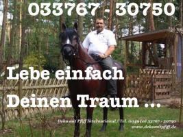 Foto 5 HALLO LIEBER EHEMANN BITTE VERGESSE NET NOCH EINE DEKO KUH FÜR UNSEREN GARTEN MITZUBRINGEN ...