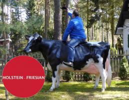 Foto 6 HALLO SASSNITZ … Sie möchten gern mal unser hauseigenes Holstein - Friesian Deko Kuh lebensgross - Modell in den unterschiedlichsten Ausführungen kennenlernen … www.dekomitpfiff.de / Tel. 033767 - 30750 / info@dekomitpfiff.de