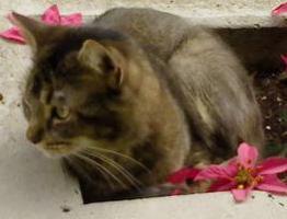 Foto 2 HILFE!!! Absolute Katzenliebhaber für Max GESUCHT!!!!