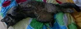 Foto 3 HILFE!!! Absolute Katzenliebhaber für Max GESUCHT!!!!