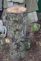 Hackklotz aus Wildbirne umd sich selber sein Brennholz zu hacken