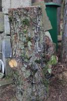 Foto 2 Hackklotz aus Wildbirne umd sich selber sein Brennholz zu hacken