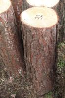 Foto 2 Hackklotz, Hauklotz um sein Brennholz zu hacken