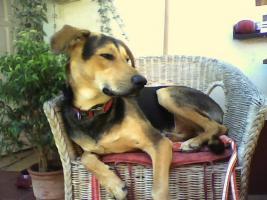 Foto 3 Hallo ich bin Chico !!!