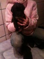 Hallo liebe Hundefreunde !!! Wir haben wieder süße kleine Dalmatinermischlinge in liebevolle Hände abzugeben.