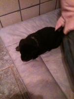 Foto 6 Hallo liebe Hundefreunde !!! Wir haben wieder süße kleine Dalmatinermischlinge in liebevolle Hände abzugeben.
