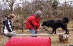 Foto 2 Harmonischen Umgang mit Ihrem Hund