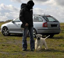Foto 4 Harmonischen Umgang mit Ihrem Hund
