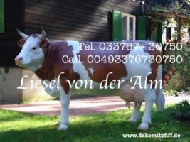 Foto 4 Hasst Du noch keine Logio Kuh nein Oh ja dann ...