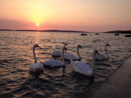 Foto 5 Haus direkt am Meer in Dalmatien bei Zadar bis 8 Personen