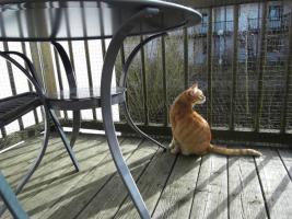 Foto 10 Haustiere willkommen ! Ferienwohnung - Hund und Katze ! Bayerischer Wald