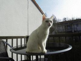 Foto 15 Haustiere willkommen ! Ferienwohnung - Hund und Katze ! Bayerischer Wald