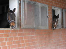 Foto 2 Helle Pferdeboxen mit Weiden frei