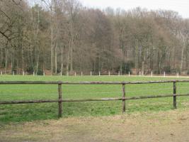 Foto 3 Helle Pferdeboxen mit Weiden frei