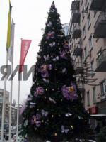 Foto 2 Hersteller der großen Weihnachtsbäumen