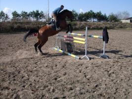 Hessisches Warmblut sucht neuen Turnier oder Familien Reiter