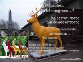 Hirsch / Pferd / Kuh