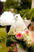 Foto 2 Hochzeitstauben Dresden ®