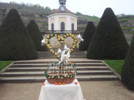 Foto 3 Hochzeitstauben Dresden ®