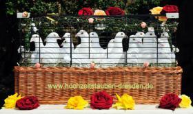 Foto 4 Hochzeitstauben Dresden ®