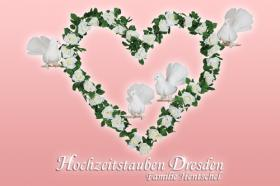 Logo Hochzeitstauben Dresden ®