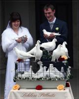 Foto 7 Hochzeitstauben Dresden ®