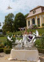 Foto 8 Hochzeitstauben Dresden ®