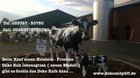 Foto 2 Hol Dir die neue Holstein Deko Kuh lebensgross ……Tel. 033767 30750