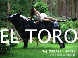 Hol Dir die neue Holstein Deko Kuh lebensgross ……Tel. 03376730750